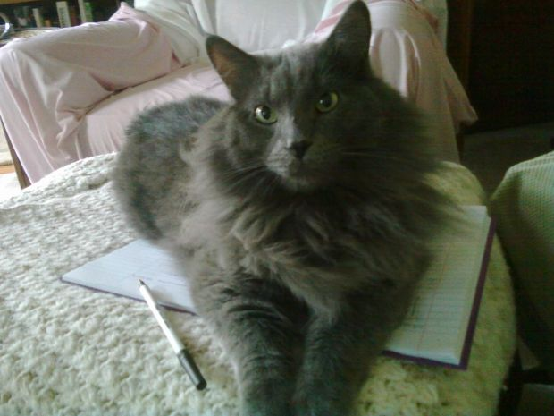 Grey cat with journal and pen